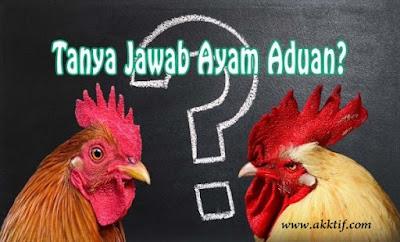Tanya Jawab Seputar Ayam Aduan dengan Antoni Putra Martadipura