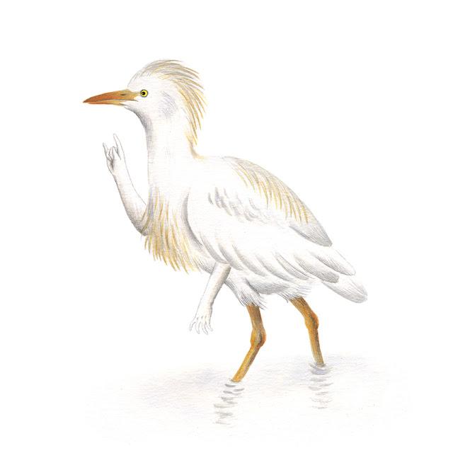 ilustración de pájaros, garcilla bueyera, ilustración de flamenco, aves de la albufera, bubulcus ibis, ilustración de aves, aves acuáticas, garza,  Inktober, Inktober 2017,
