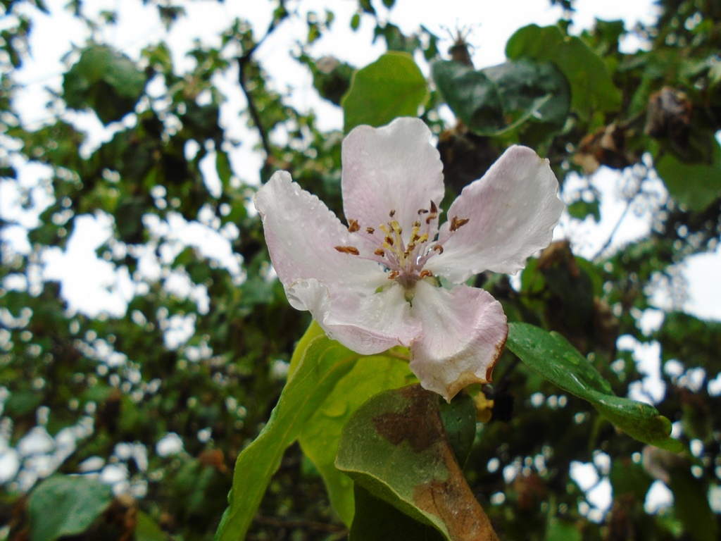 Montesymasdebucuesa colores de primavera en mi for Jardines de primavera