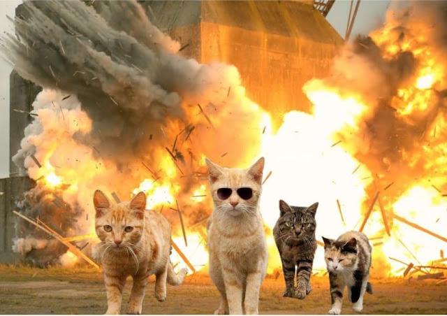 Danger Cat - License, download or print for £4.00