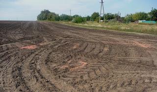 Дорога на Плещеевку. Поле. Рассыпанное зерно