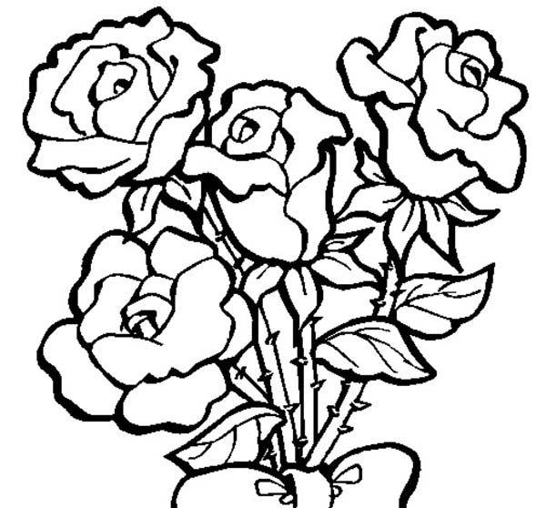 Gambar Bunga Mawar Untuk Mewarnai Anak Tk