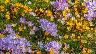 Mariposas en el jardín con bulbos de flor de primavera