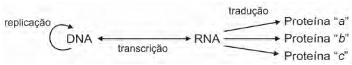 ENEM 2009: A figura seguinte representa um modelo de transmissão da informação genética nos sistemas biológicos.