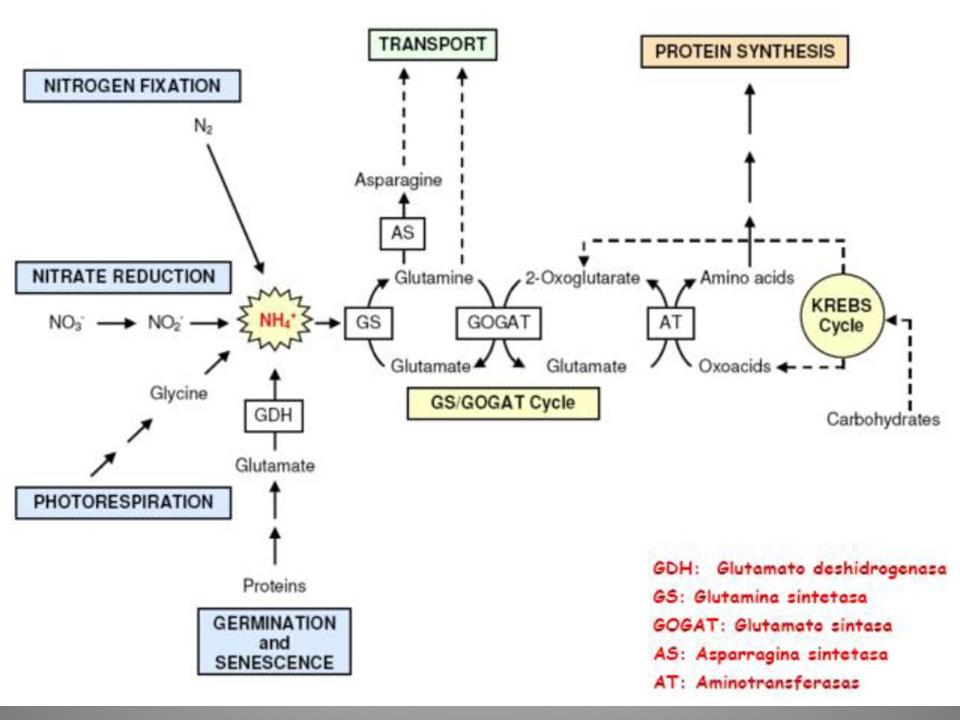 Cómo Acelerar Eⅼ Metabolismo  Artículos  2021