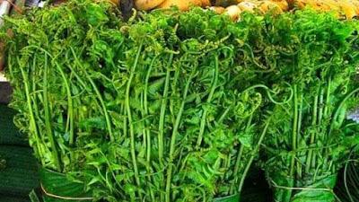 Manfaat dari Sayur Pakis bagi Kesehatan, Terutama untuk Ibu Hamil