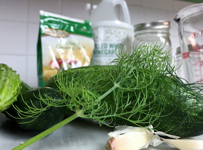 Ingredients for making pickles: pickling salt, white vinegar, cucumbers, dill, and garlic