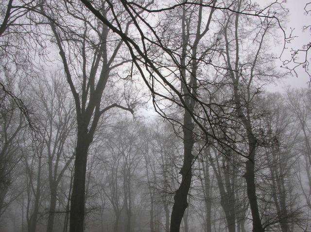 mgła, nastrój, drzewa, park