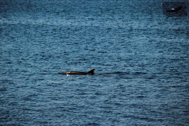 Sitio para divisar delfines Galicia
