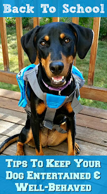 doberman mix rescue dog back to school tips