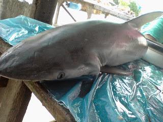 Resep Gulai Ikan Hiu