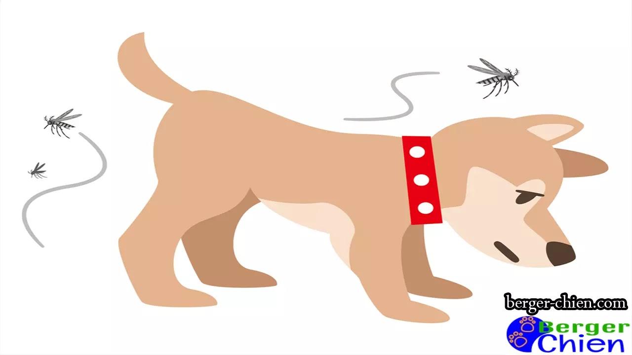 Obstruction intestinale chien