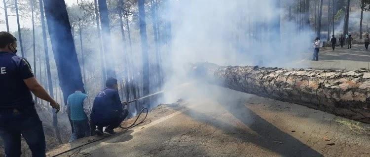 पिथौरागढ़-अल्मोड़ा मोटरमार्ग में आग के कारण गिरे पेड़ से आग बुझाते दमकल कर्मी