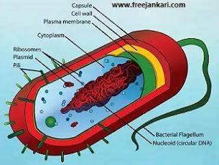 Biology-in-Hindi