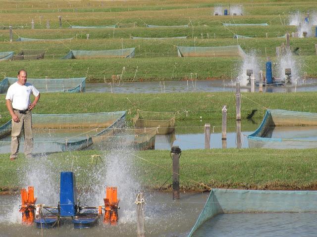 cria peixe tilapicultura cria o intensiva de til pias