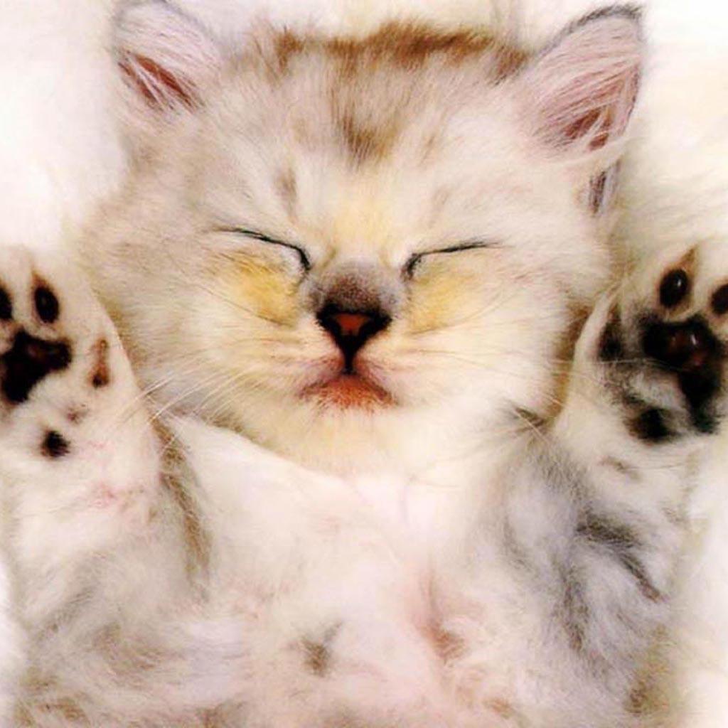 Free download ipad mini wallpapers 1024x1024 ppt garden - Free wallpaper of kittens ...