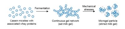 Gelasi Protein Susu dan Pembetukan Suspensi Mikrogel