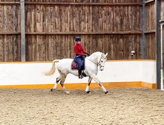 Dressage Training - Team Tunnah Equestrian Blog