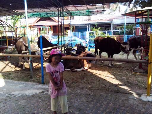 Keira berfoto didepan hewan kurban Idul Adha