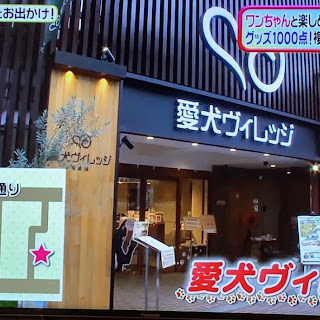 【TV紹介】日本テレビ「ヒルナンデス」に愛犬ヴィレッジが紹介されました