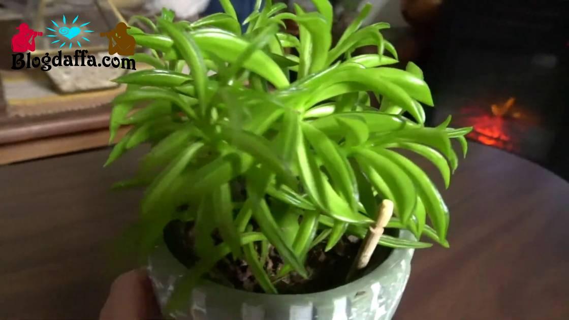 happy bean plant