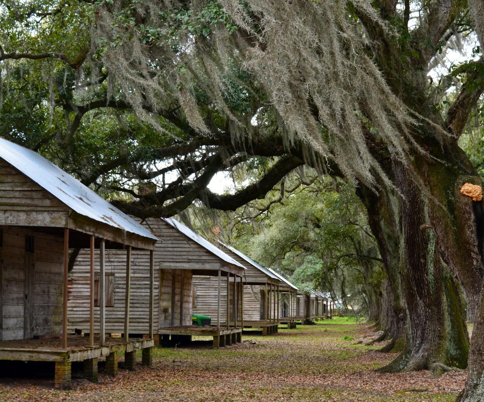 Mille Fiori Favoriti: Oak Alley and Evergreen Plantations