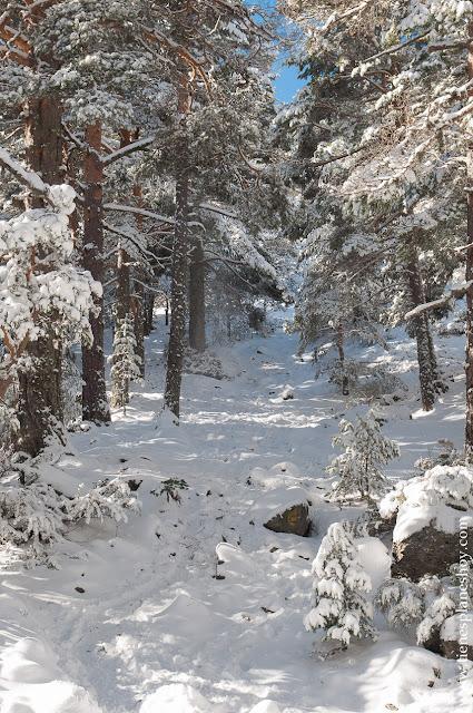 Ruta circular raquetas nieve Cerradillas Cotos Madrid Parque Guadarrama