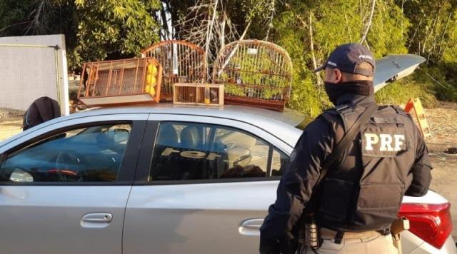 PRF flagra condutor com pássaros silvestres avaliados em 24 mil reais, em Vitória da Conquista