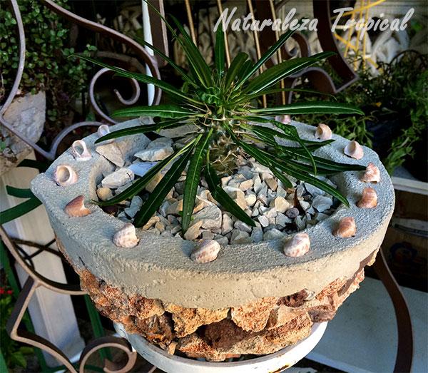 naturaleza tropical: tipos de macetas para cultivar en casa