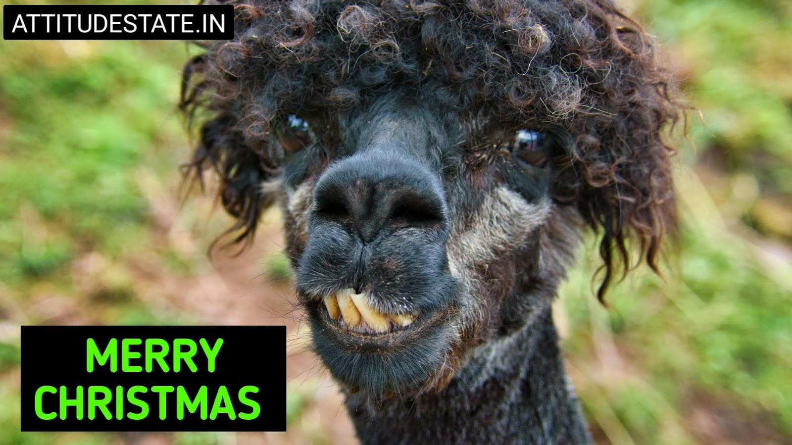 funny merry christmas animated gif