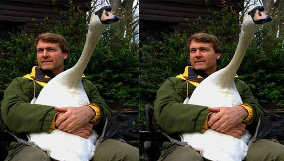 A man sitting down with a big white duck on his lap