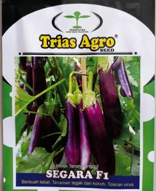 Benih Terong Ungu SEGARA F1 Produk Trias Agro Seed