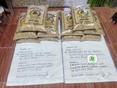 Benih padi yang dibeli Eka Sragen, Jateng. (Sebelum packing karung ).