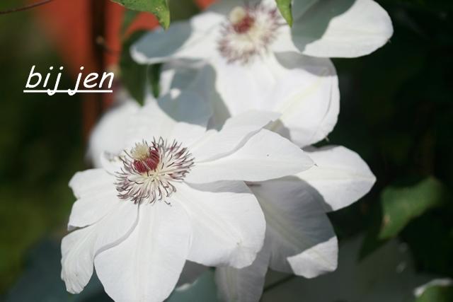 Garten, weiß blühend