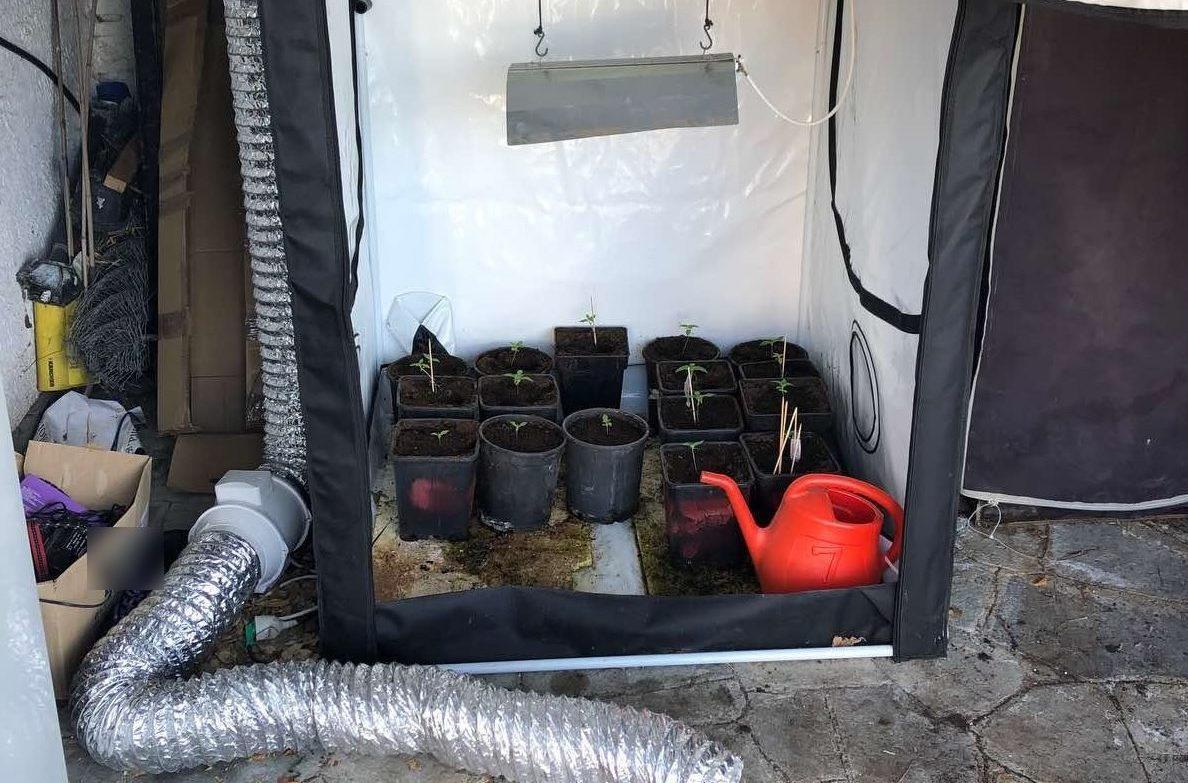 Καλλιεργούσε 16 δενδρύλλια κάνναβης σε σπίτι στη Χαλκιδική
