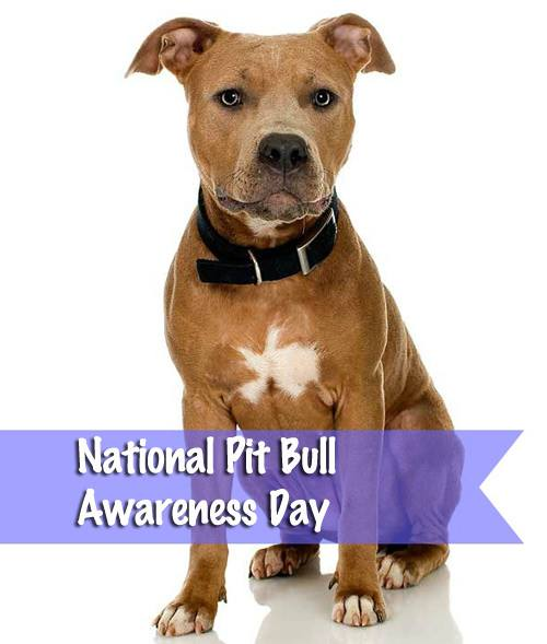 National Pit Bull Awareness Day Wishes Awesome Picture