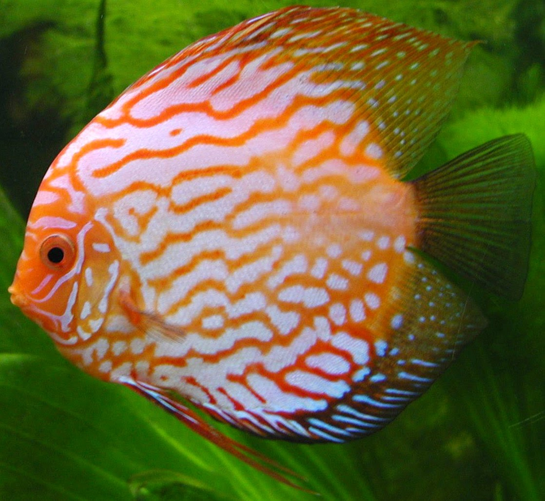 Top 15 Most Beautiful Fishes