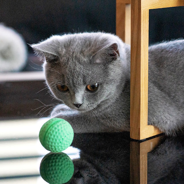 Why do kittens throw toys in the air over their shoulder?