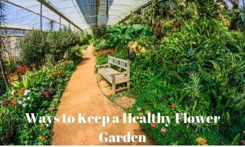 Ways to Keep a Healthy Flower Garden