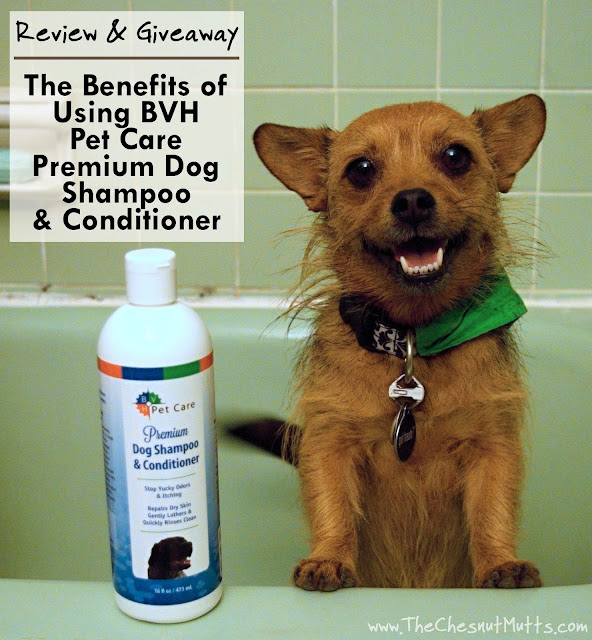 Review & Giveaway: The Benefits of Using BVH Pet Care Premium Dog Shampoo & Conditioner