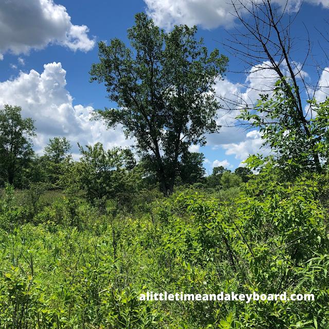 Grasslands blend into forest at McDonald Woods Forest Preserve.