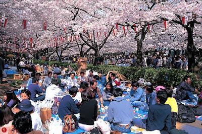 ไม่จองพื้นที่ชมทัวร์ญี่ปุ่นดอกซากุระบาน