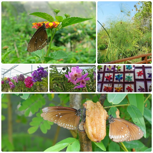 Chiang Mai, Butterfly, Orchid, Elephant Farm