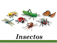 http://www.curiosidades2020.com/search/label/Insectos
