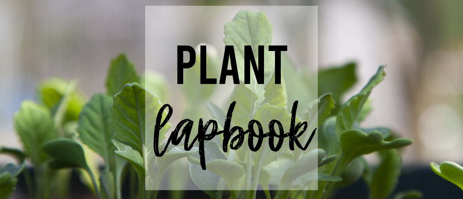 Plant Life Cycle lapbook activities for spring K-2