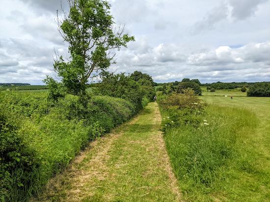 Nuthampstead footpath 13 alongside Barkway Park golf course