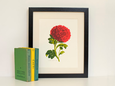 Chrysanthemum Flower A4 Screen Print Botanical Drawing Style Limited Edition