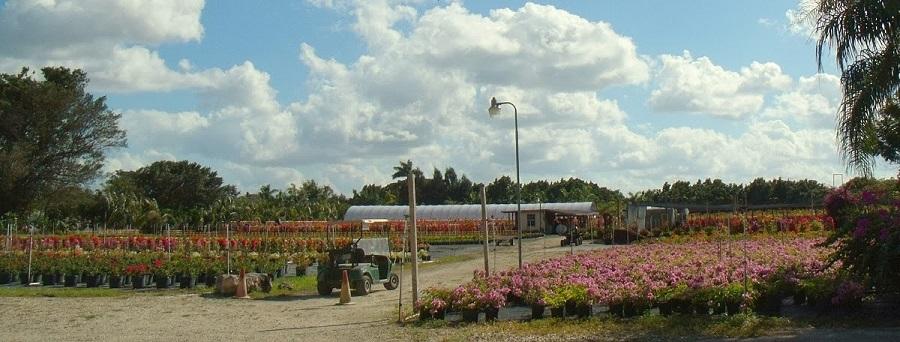 Nurseries o viveros de flores