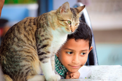 Little boy with pet cat