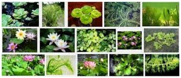 Daftar Nama Tumbuhan Beserta Nama Latin
